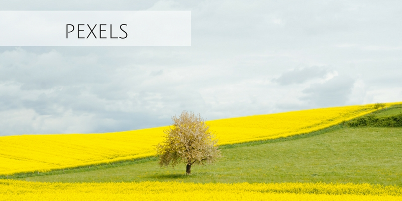 Beautiful stock photograph of tree in middle of yellow field from Pexels