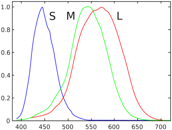 A line chart illustrating the eye's sensitivity to different wavelengths of light.
